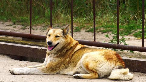 Stray red dog GIF