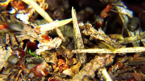 Life of Ants GIF