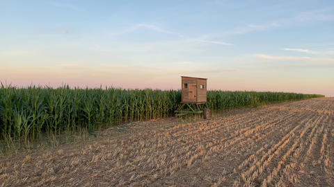 Lookout tower between corn field and empty field after harvesting Live Action