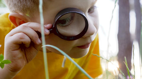 Preschooler exploring the nature with help of magnifying glass. Human and nature ライブ動画