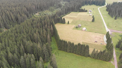 Overhead aerial view of woods and pine trees, Italian Alps ライブ動画