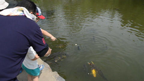Japanese Children Feeding Koi Carpers At Nara Japan 2015 ライブ動画