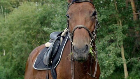 Brown horse eating green grass on rural pasture. Purebred mare chewing fresh GIF