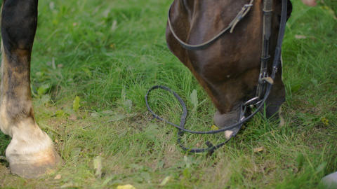 Horse eating fresh grass at rural pasture. Horse grazing on green field at Live Action