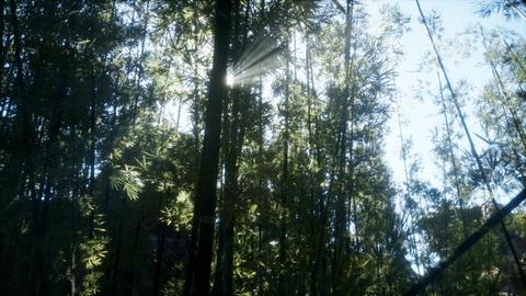 Windy Tranquil Arashiyama Bamboo Grove GIF