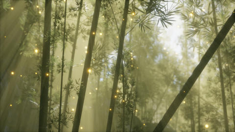 asian bamboo forest with morning fog weather GIF