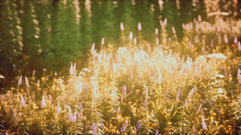 wild field flowers at summer sunset GIF