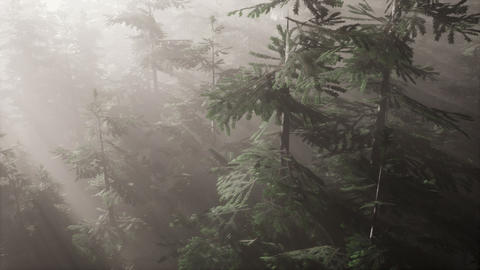 aerial sunrays in forest with fog GIF