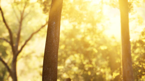 Sunbeams pour through trees in misty forest GIF