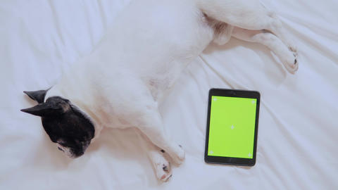 dog and digital device indoors Live Action