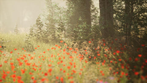 Clearing in the forest in sunny summer morning GIF