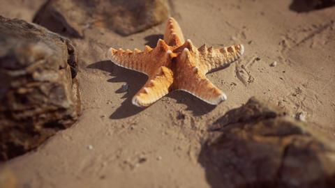 Starfish on sandy beach at sunset GIF