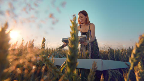 Woman artist who paints a picture of ears of wheat at sunset. The artist paints Live Action