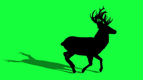 3d animation silhouette of Deer on green screen Animation