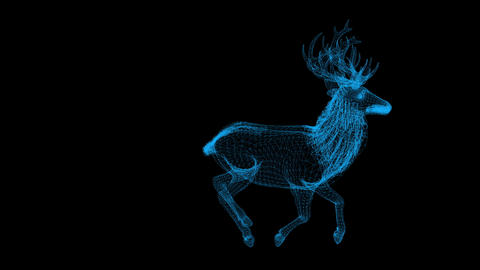 wire frame animation of Deer on black background Animation