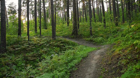 A path leading through a hilly slope overgrown with coniferous forest Acción en vivo