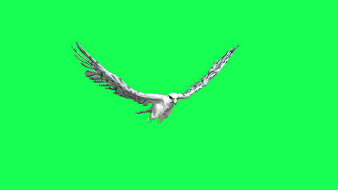 Falcon Gliding and Flapping - 3D animation of flying bird of prey isolated on green screen Animation