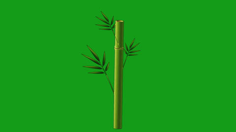 Bamboo plant motion graphics with green screen background Animation