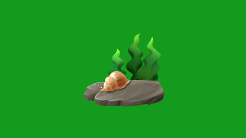 Underwater plant and sea shell motion graphics with green screen background Animation