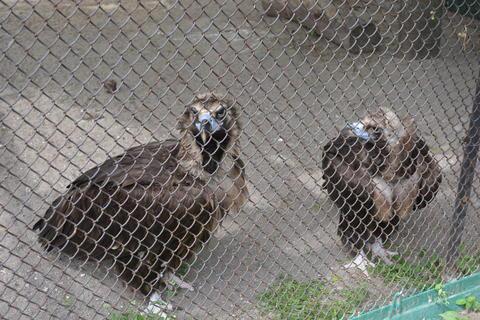 eagles Photo