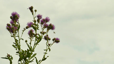 Wind, weed and hoverfly GIF