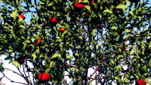 Apple Tree with Leaves & Fruits moved by the Wind Loop Background Animation
