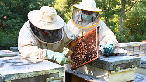 Beekeeper on apiary. Beekeeper is working with bees and beehives on the apiary GIF