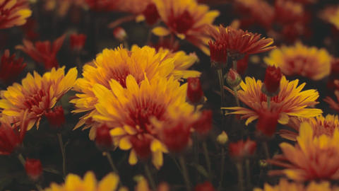 Combination Of Red And Yellow Flowers GIF