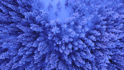 Aerial Shot Of Forest Covered In Snow Live Action