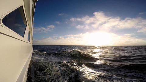 Diving Safari trip across the Pacific ocean. Calidornia Live Action