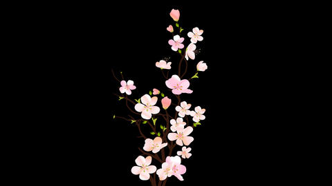 Pink Flower Animation Stock Video Footage