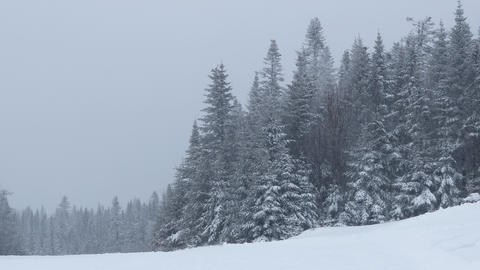 Winter landscape with snowing weather and snow covered trees Acción en vivo