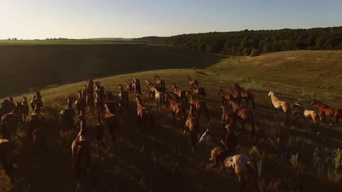 Horses are galloping on grass horseman and horizon freedom Live Action
