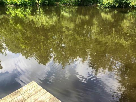 Surreal ripples on surface of woodland pond Fotografía