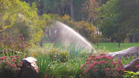 Flower garden in the park water sprinkler in a garden Live Action