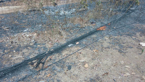 Grass fire burn dry foliage and Fiber optics wires. Destruction environment by Live Action