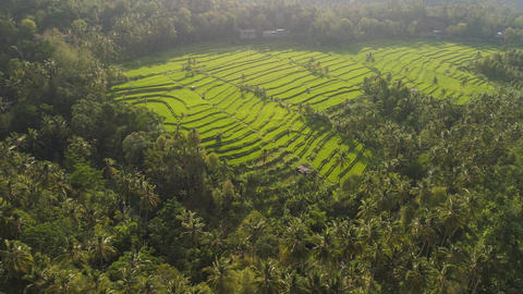 Rice terraces and agricultural land in indonesia Live Action