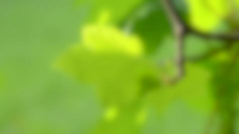 Blurred background. green leaf on a branch on a green blurry background Live Action