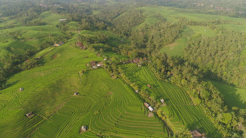 rice fields with agricultural land in indonesia Live Action