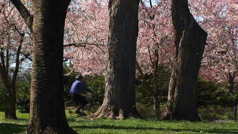A runner and a bicyclist exercise in a beautiful park... Stock Video Footage
