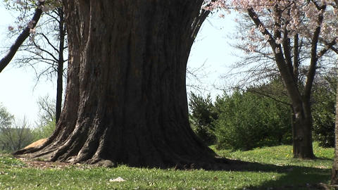 The camera pans across a beautiful park full of bright... Stock Video Footage