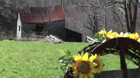 Bright yellow sunflowers are the only signs of life near... Stock Video Footage