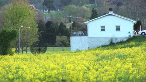 Bright yellow flowers surround a satellite dish belonging... Stock Video Footage