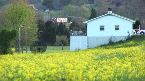 Bright yellow flowers surround a satellite dish belonging to a home set on a hillside near a rural h Footage