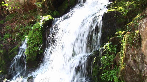 Lush vegetation surrounds a cascading waterfall Stock Video Footage