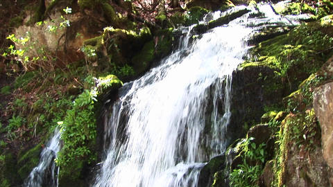 Lush vegetation surrounds a cascading waterfall Footage