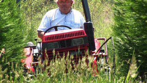 A Senior Drives A Lawn-mower Through Some Tall Grass stock footage