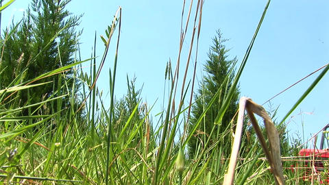 A worms-eye view of a grassy field as a red mower passes by Stock Video Footage