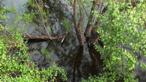 Medium-shot of a tree growing in a Texas swamp Stock Video Footage