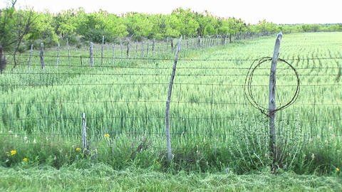 Medium-shot of a crop fenced in on a Texas ranch Stock Video Footage